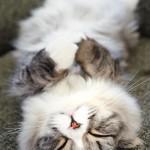 ツイキャスのキャス主manaちゃんは猫好き