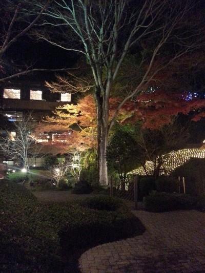 ④城山観光ホテルイルミネーションでライトアップされた木を撮影したけどパッとしない