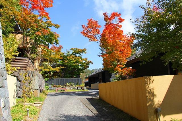 きっと、秋。ここは、秋。こころ、冬。