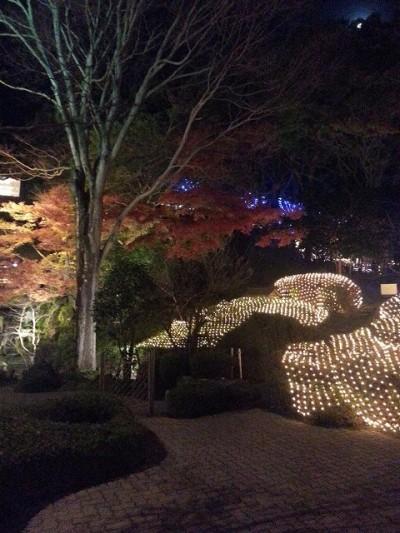 ⑤城山観光ホテルイルミネーションでライトアップされた木と丘のライトアップ
