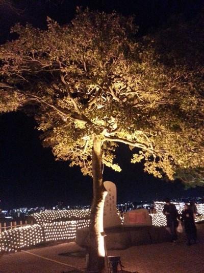 ②城山観光ホテルイルミネーションでライトアップされた木を撮影