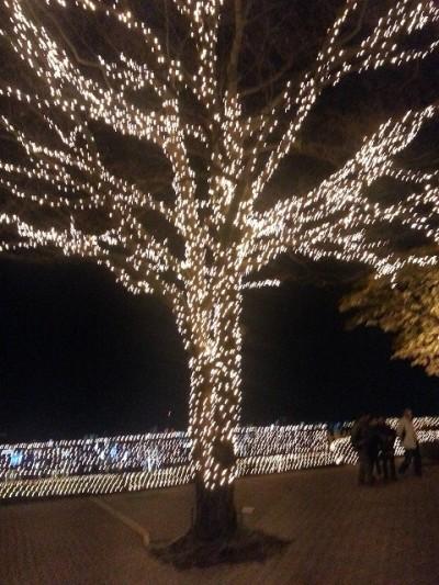 ③城山観光ホテルイルミネーションでイルミネーションをまとった木を撮影